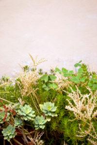 Sukkulent, Pflanzen, Toskana, Italien