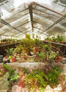 Gewächshaus, Pflanzen, Florenz, Toskana, Italien