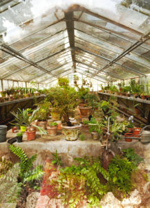 Greenhouse, plants, Florence, Tuscany, Italy