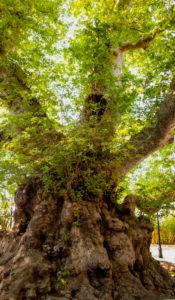 Baum, Klimawandel, Pflanzen, Naturschutz, Nachhaltigkeit