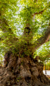 Tree, climate change, plants, nature conservation, sustainability