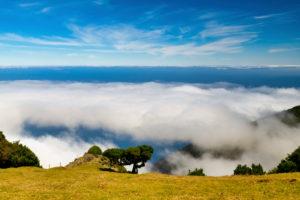Wanderung im Gebiet Fanal zum Lorbeerwald, Unesco Weltnaturerbe, Madeira,