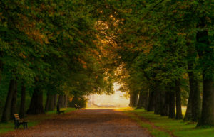Germany, Bavaria, tree avenue in Nymphenburg at sunrise
