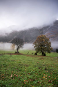 Switzerland, Glarus, trees in the fog, autumn