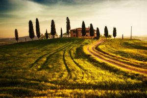 Italien, Toskaa, Feld im Sonnenlicht, Zypressen