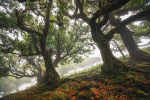 Nebel im Wald auf der Insel Madeira, Portugal