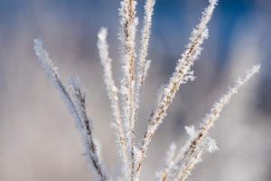 Winterlandschaft mit Pflanzen im Raureif