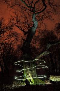 Lichtspur um einen Baum in der Nacht