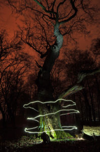 Light trail around a tree in the night