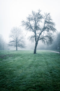 Misty mood in the early morning in spring