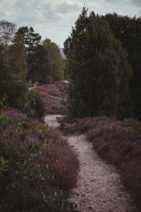 Heathland in the Lüneburg Heath
