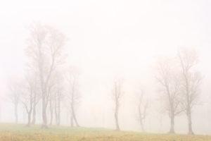 Nebel in Ahornwäldchen