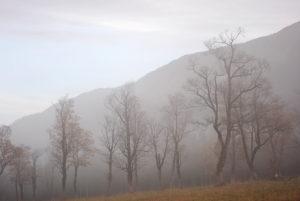 Nebel im Gebirge mit einzelnen Ahornbäume.