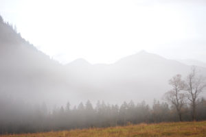 Nebelige Berglandschaft mit Ahornbäumen