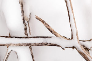 Treibholz am Ufer des Walchensee im Schnee