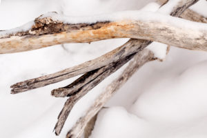 Driftwood on the shore of Walchensee in the snow