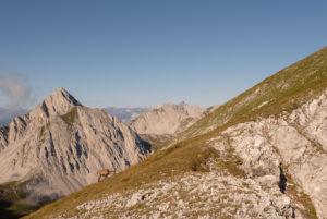 An Alpine ibex is grazing on the hillside