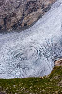 """Schafe am Rand des Schlatenkeesgletscher in der Venedigergruppe an der """"Neuen Prager Hütte"""" beim Aufstieg zum Großvenediger in Osttirol"""