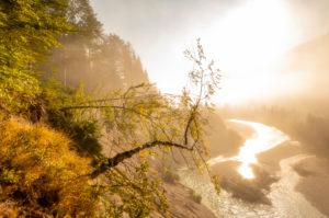 Morning golden foggy mood in the Isar meadows in the Karwendel near Wallgau