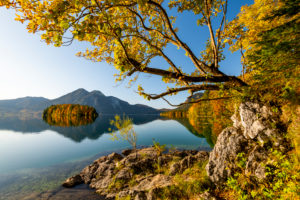 Herbst am Walchensee mit Spiegelung und der Insel Sassau. Im Vordergrund ein herbstlicher Baum und Felsen am Ufer, im Hintergrund der Gipfel des Herzogstandes.