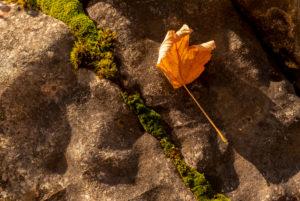 Abgestorbenes Ahornblatt am Ufer des Walchensee auf einem Stein im Abendlicht liegend. Ein Strich aus Moos teilt das Bild.