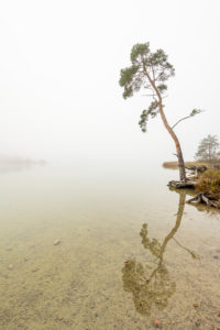 Lonely tree in autumn on the banks of the Fohnsee, the large Easter lake. Autumn mist and a dreary mood radiate calm.