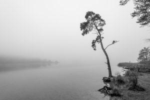 Einsamer Baum im Herbst am Ufer des Fohnsee, dem großen Ostersee. Herbstnebel und eine triste Stimmung strahlen Ruhe aus.