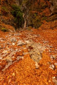 Aufgestautes Laub an einem kleinen Bachlauf in den bayrischen Voralpen bei Kochel im Herbst.