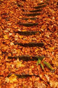 Steinerne Stufen und ein grüner Farn im dichten Herbstlaub bei Kochel am Kochelsee.