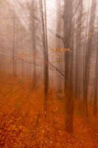 Herbst im Wald mit bewegtem Zoom