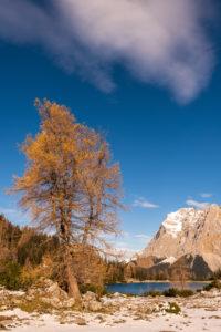 Winter mit einem Baum am Ufer des Seebensee in Tirol, im Hintergrund Wetterstein und Zugspitze.
