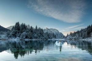 Ein Höckerschwan auf dem Stausee Krün am frühen Morgen im Winter. Im Hintergrund Schnee bedeckte Bäume und das verschneite Karwendel Gebirge