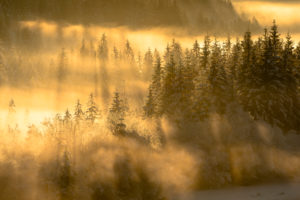 Winterstimmung bei Schnee und gegenlicht im Abendrot an der unteren Isar bei Wallgau. Fichten stehen in einem kleinen Wald im Tal nahe der Soierngruppe und werden von Lichtstrahlen durchflutet.