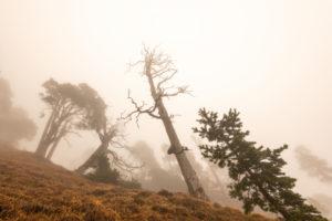 Kiefern und andere Bäume im Nebel am Herzogstand. Einem der Münchner Hausberge im Estergebirge, den bayrischen Voralpen. Aufnahme steil nach oben, den Hang Richtung Gipfel hinauf.