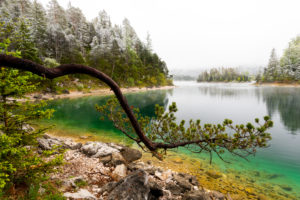 A branch or tree of a pine on the banks of the Eibsee in spring during the ice saints. In the background thick clouds and snow-covered tree tops, as well as a small island with turquoise water.