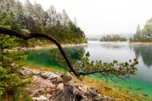 Ein Ast bzw. Baum einer Kiefer am Ufer des Eibsee im Frühling während den Eisheiligen. Im Hintergrund dichte Wolken und schnee bedeckte Baumwipfel, sowie eine kleine Insel bei türkisem Wasser.
