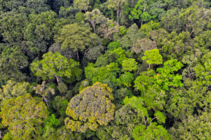 Trees and vegetation in the Jungle and dense forest of Dzanga Sangha. Central African Republic. WWF