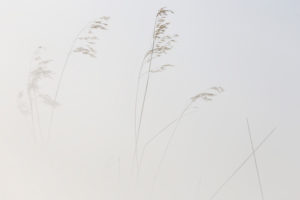 Reeds, lines, plants linked to the aquatic environment in the Natural Park of Las Lagunas de Villafafila, Zamora, Spain
