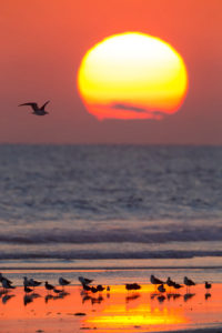 Sunset at Taqah Beach, beach with gulls resting on the shore, Taqah, Dhofar, Oman