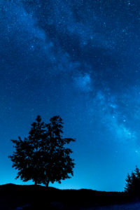 European Wild Pear and Milky Way, nocturnal landscape