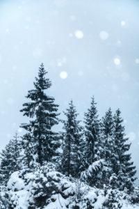 tannen, schneefall, winterlandschaft, rocca pietore, agordino, dolomiten, belluno, venetien, italien