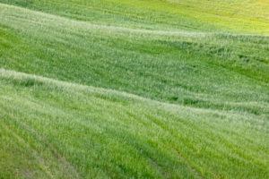 Grüne Wiese auf den Hügeln der Crete Senesi, Asciano, Siena, Toskana, Italien