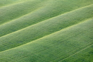 Grüne Wiese auf den Hügeln der Crete Senesi, Asciano, Detail, Siena, Toskana, Italien