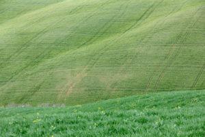 Spuren auf den Wiesen in den Hügeln der Crete Senesi, Detail, Asciano, Siena, Toskana, Italien