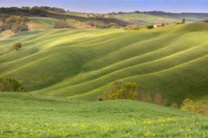 Wiesen und Hügel, Landschaft der Crete Senesi, Asciano, Siena, Toskana, Italien