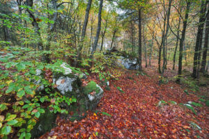 autumn beech forest at the pass of sant' osvaldo, cimolais, pordenone, friuli venezia gulia, italy