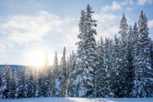 coniferous forest, sunlight filters through the snow-covered trees, Livinallongo del Col di Lana, Belluno, Veneto, Italy