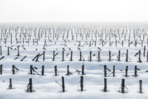 wheat stubble field in winter with snow and fog, sedico, belluno, italy
