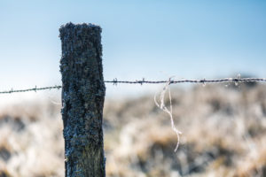 barbed wire fence on a frosty winter morning, cansiglio, tambre d'alpago, belluno, veneto, italy