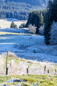 frosty winter morning on the pastures of the cansiglio, tambre d'alpago, belluno, veneto, italy